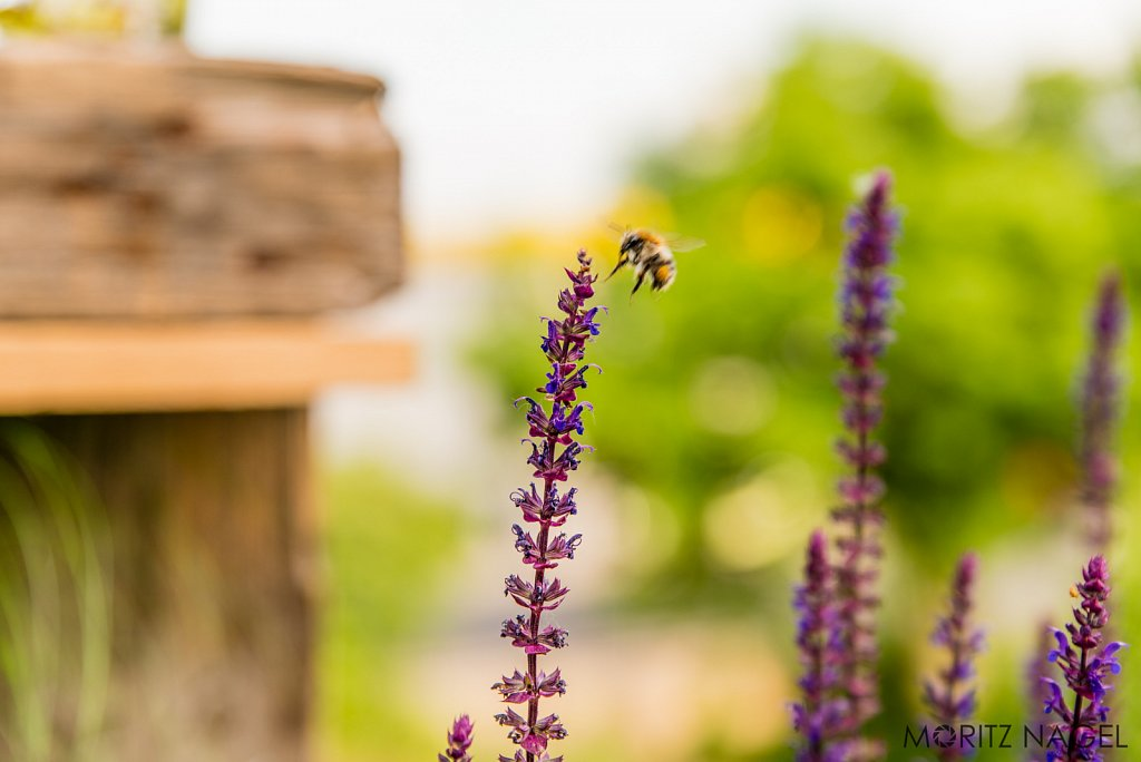 Moritz-Nagel-Little-Bee-2793.jpg