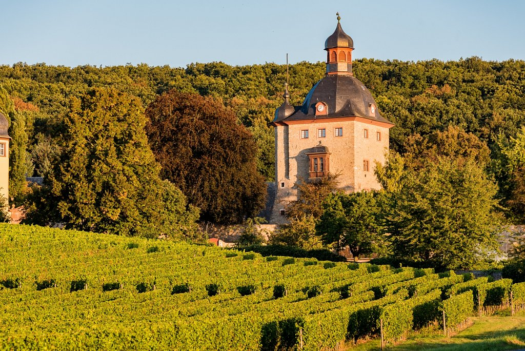 Moritz-Nagel-Schloss-Vollrads-Weinberge-2016-19.jpg